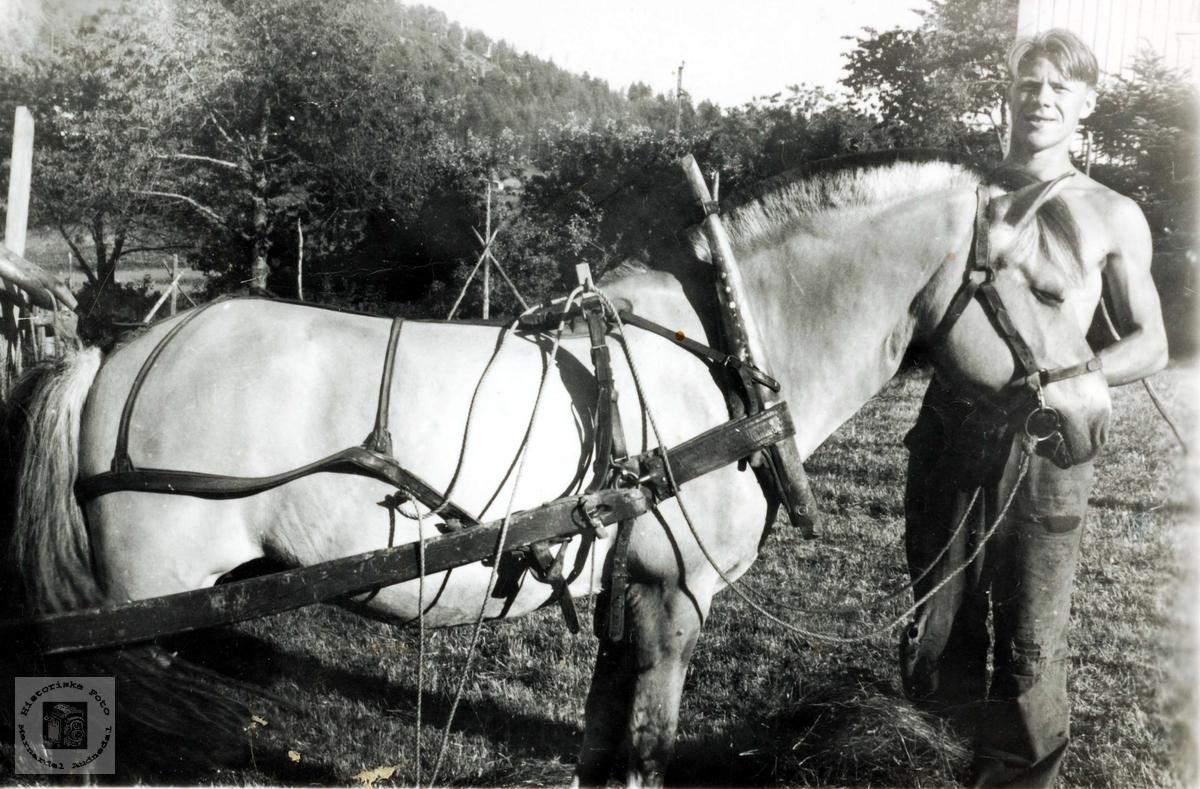 Olaf Høyland med arbeidshesten. Grindheim.