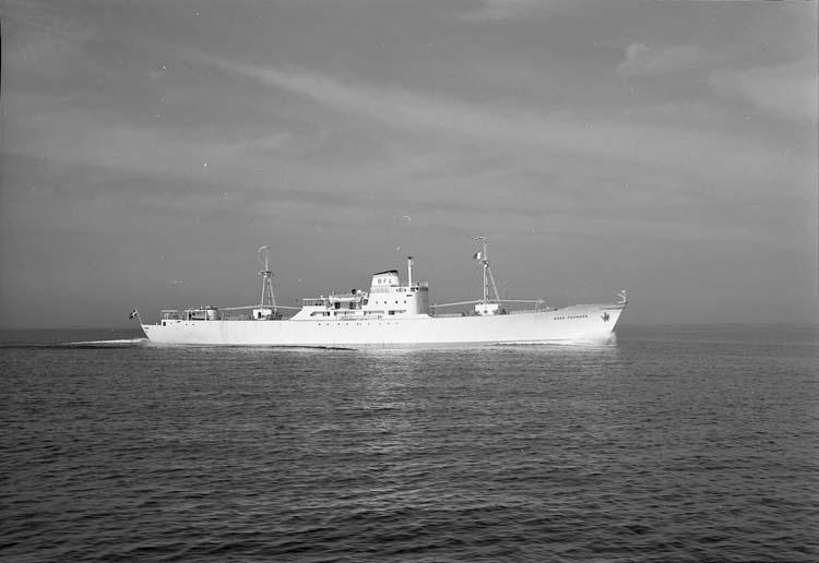 M/S Aase Thordén DWT.3.500 Rederi AB Aranäs, Uddevalla Kölsträckning 56-02-07 Nr. 155 Leverans 56-05-03 Kyllastfartyg