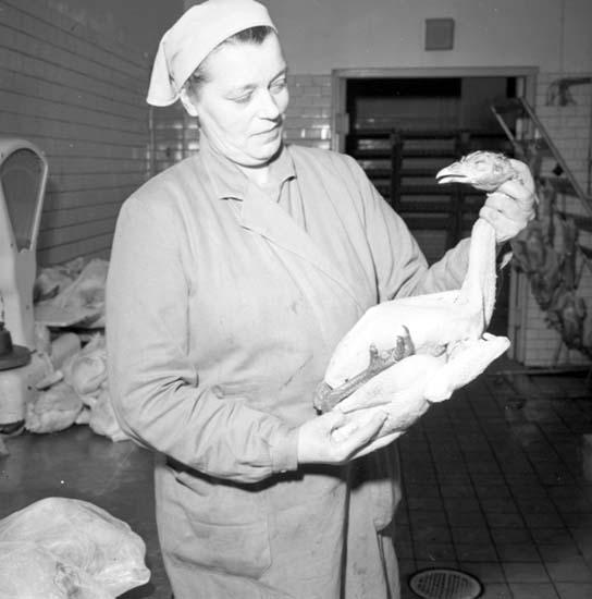 """Enligt notering: """"Kalkon"""" fjäderfäfabriken Dec 57""""."""