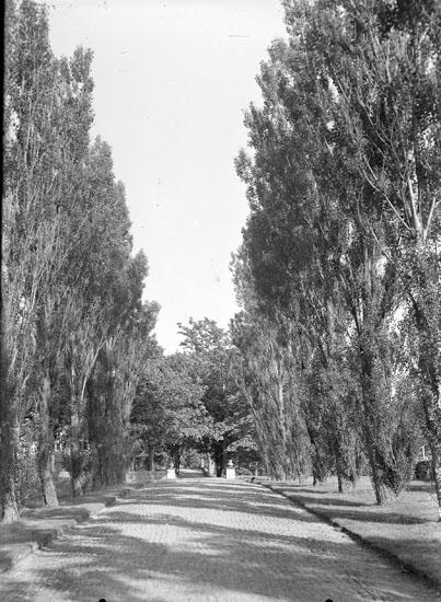 Framfartsväg till Morlanda Säteri kantad av pyramidpopplar