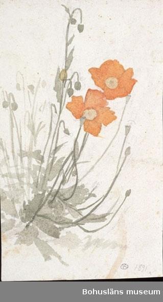 Studie (1891) Omonterad akvarell Övrig historik se UM76.14.001