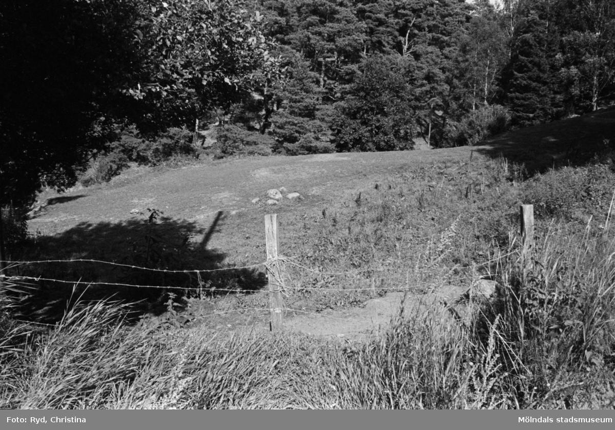 Inhägnad betesmark för djur, Hällesåker 1:3, 1991.