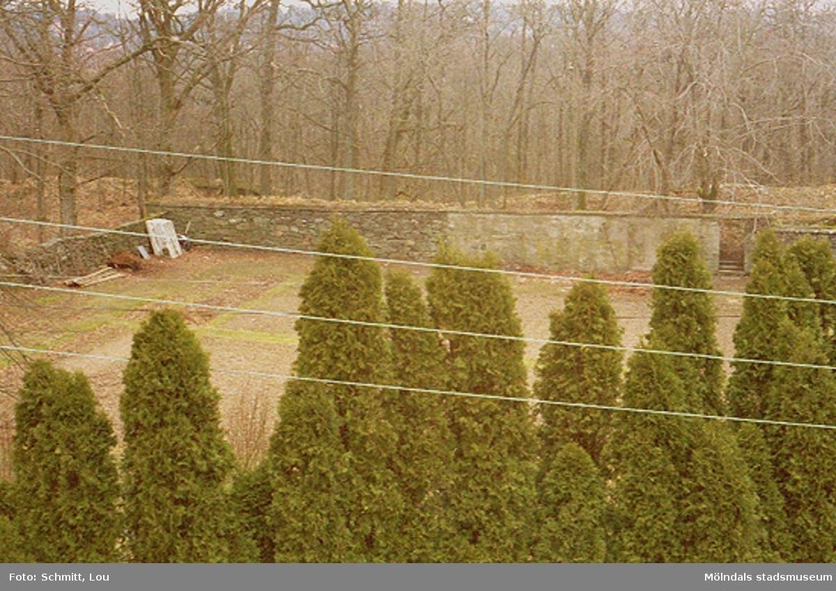 Höga buskar samt en trädgårdsmur vid Gunnebo slottspark, mars 1995.