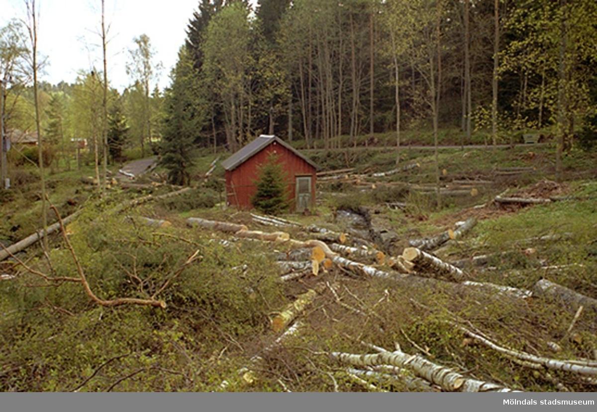 Avverkning av skog kring ett uthus som ligger söder om Djupedala kraftstation, sett från norr. Maj 1998.
