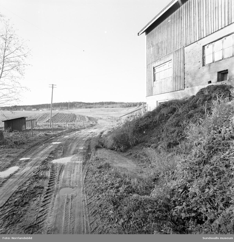 Dynghögen vid en ladugård i Kovland rinner ut i vägen.