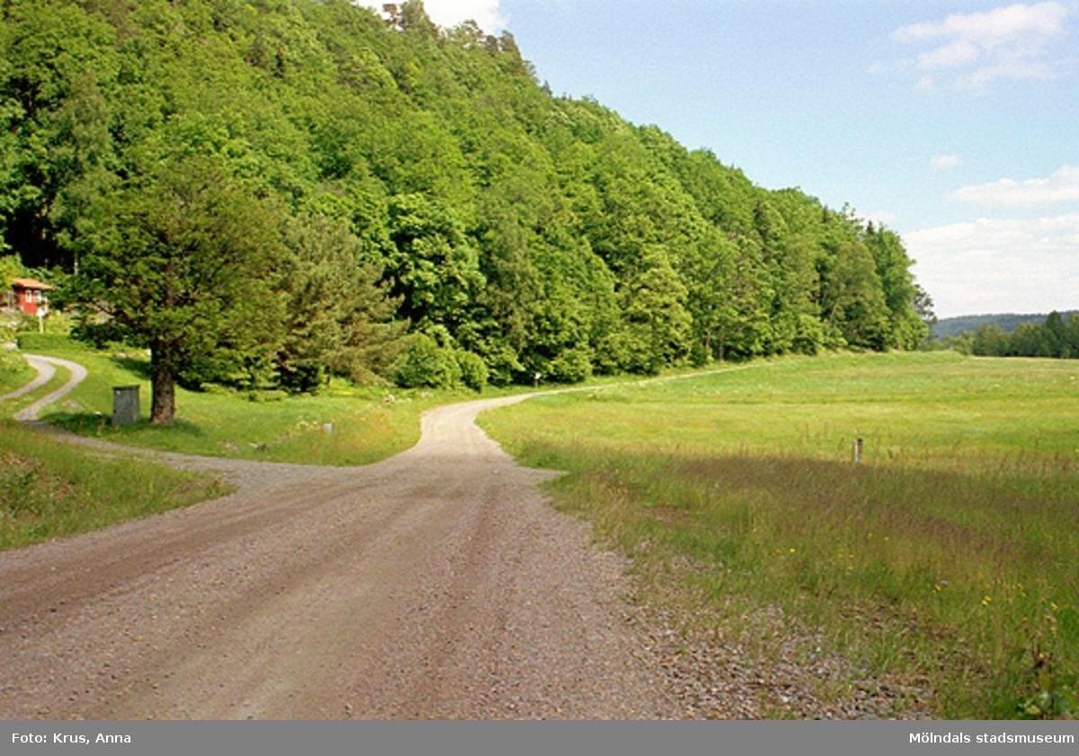 Inseros 1:9. Miljö över vägen, skogen och gården i väst.