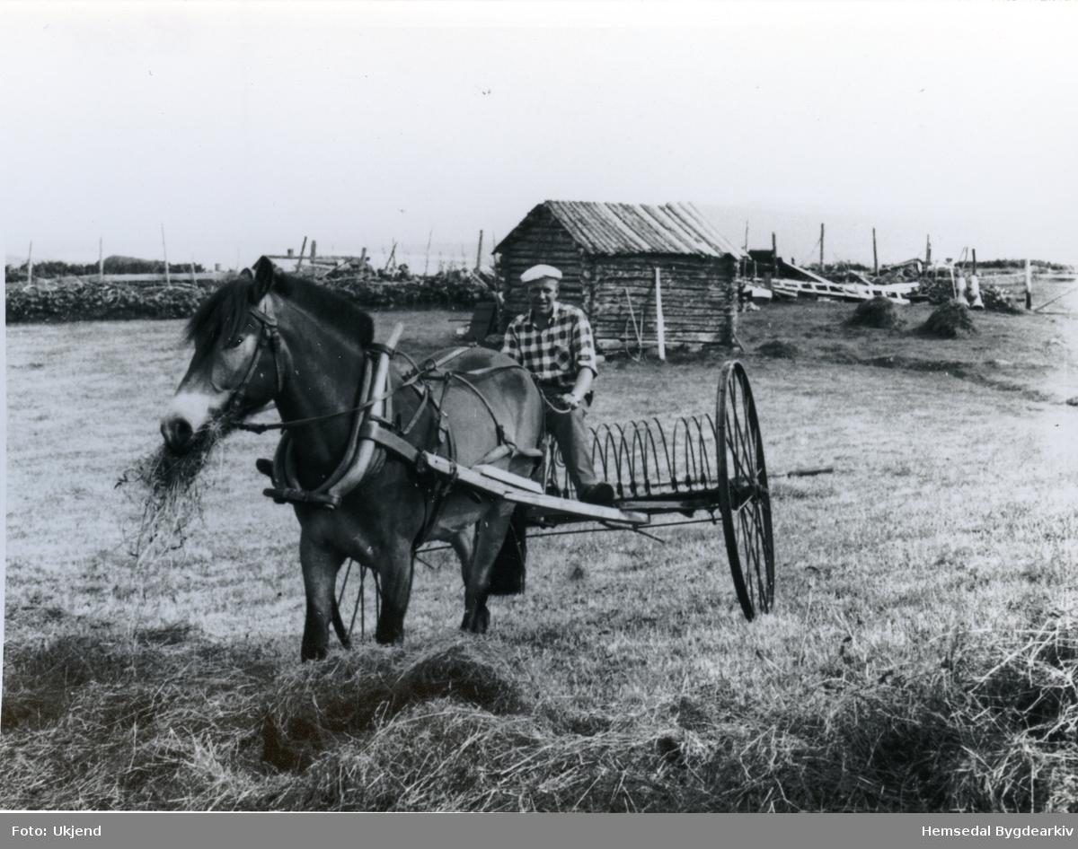 Hest med høyrive i arbeid på Lykkjastølane i Hemsedal. Hans Engebretsgard med taumane.