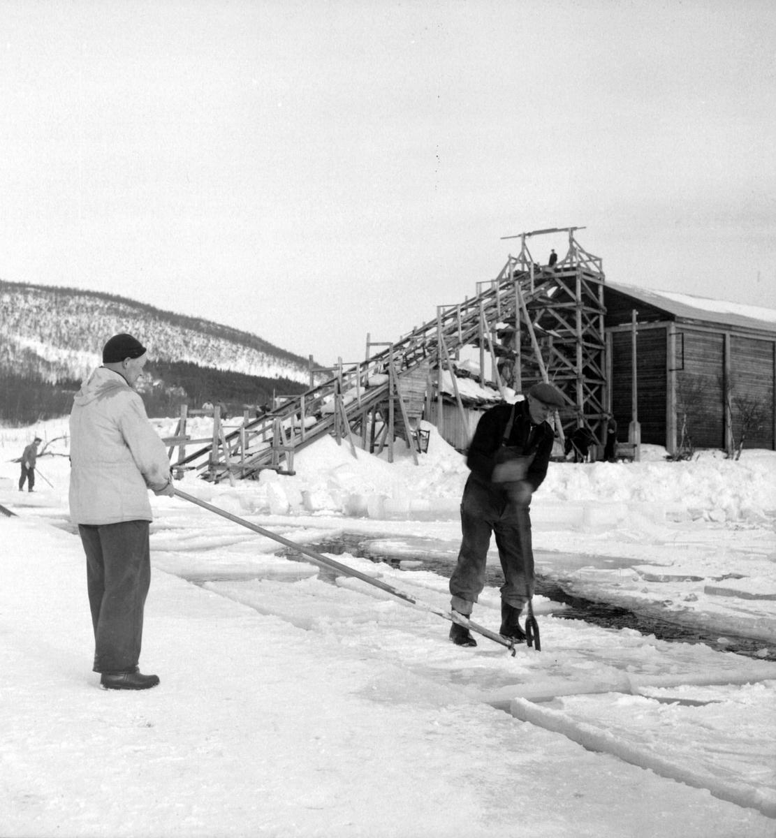 Isskjæring på Møkkelandsvannet, 1954. I bakgrunnen ser vi en renne som var laget for lasting av is inn på islagret.