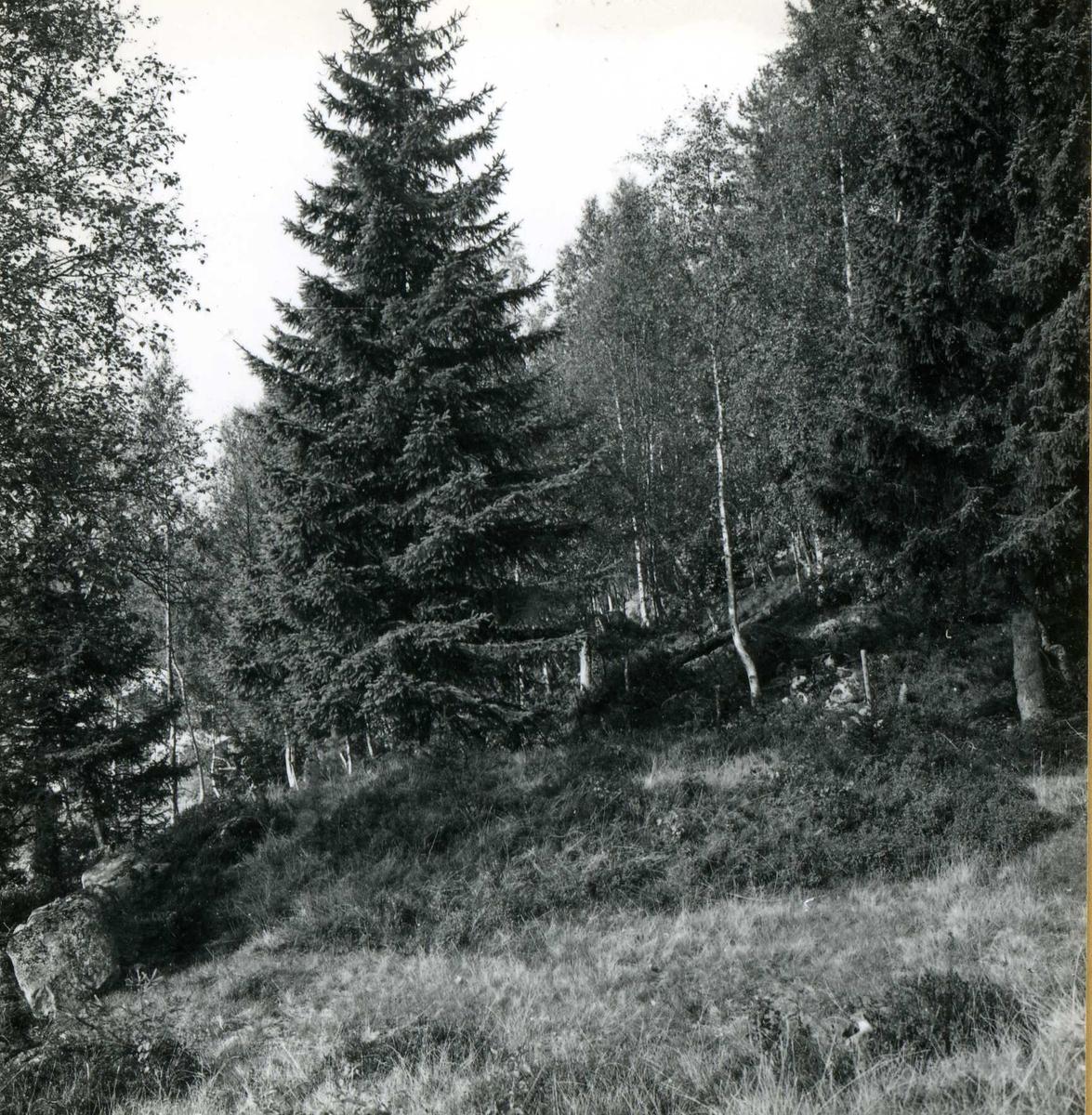 Tilløpstunnel frå Vesås. Skogsområde