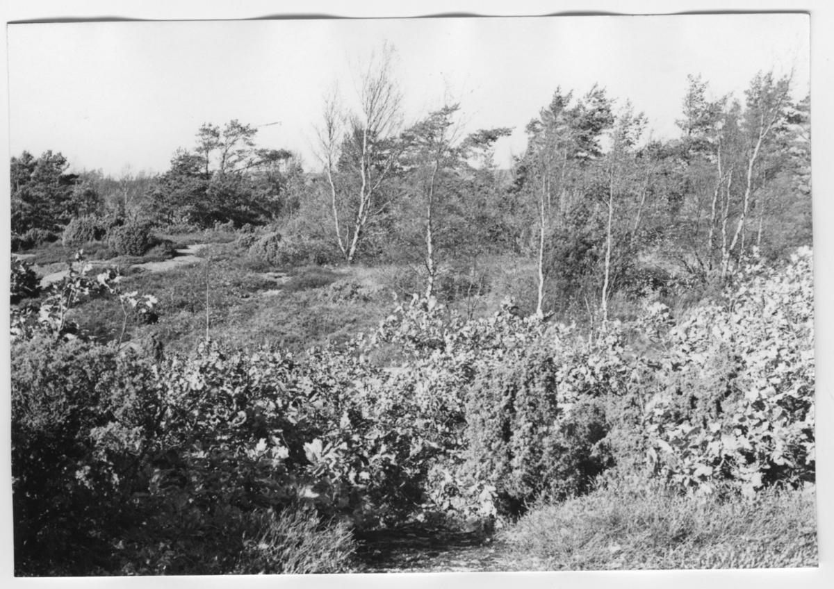 'Bildtext: ''Skogsområde. Riktning 340.'' ::  :: Ingår i serie med fotonr. 6970:1-1125, dokumentation av Hisingens naturgeografi, visande landskapsformerna i stora drag och gjord inför exploateringen av området. Platserna för fotograferingen finns utsatta på karta i skala 1:4000 som finns på Göteborgs Naturhistoriska musem. Fotoriktningen mättes med kompass i gammalgrader.'