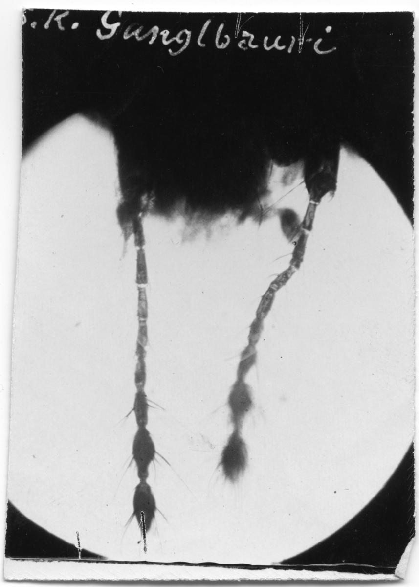 'På bilden står: ''S.K. Gunglbanvi.'' ::  :: Bilden inskannad och sedan spegelvänd för att texten ska synas.'