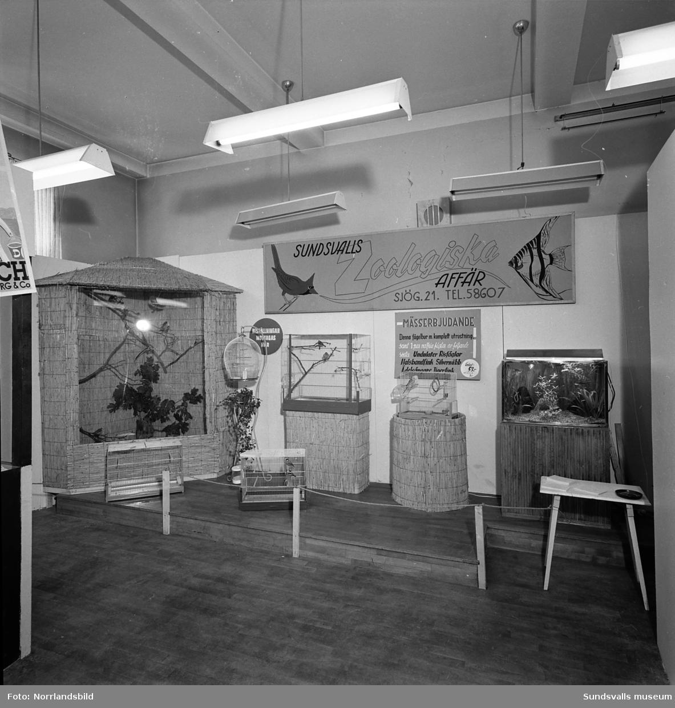 Sundsvalls Zoologiska affär på Sundsvallsmässan 1954.