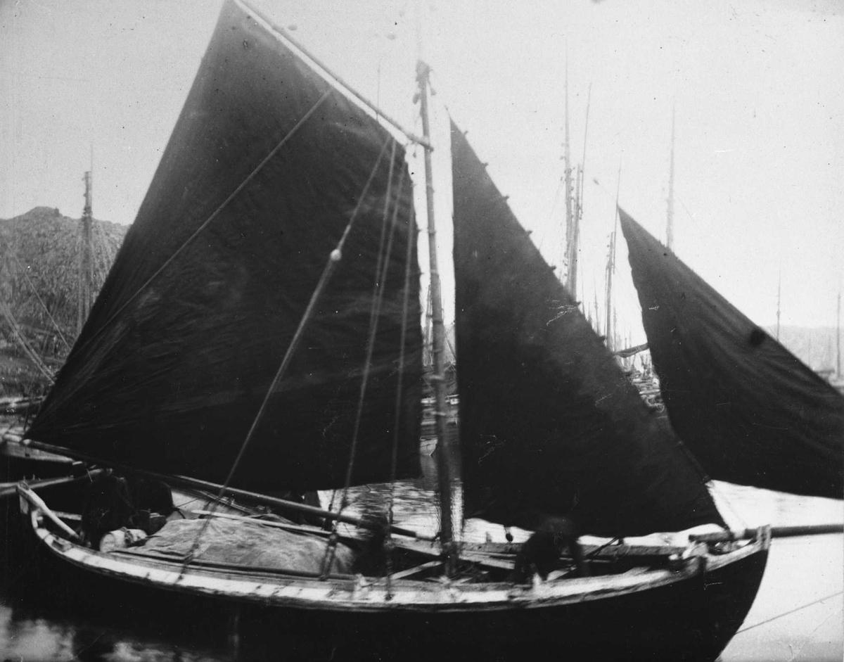 Spissgavla notbåt med gaffelsegl, fokke og klyver. Fiskebåttyper ved vårsildfisket i 1893.