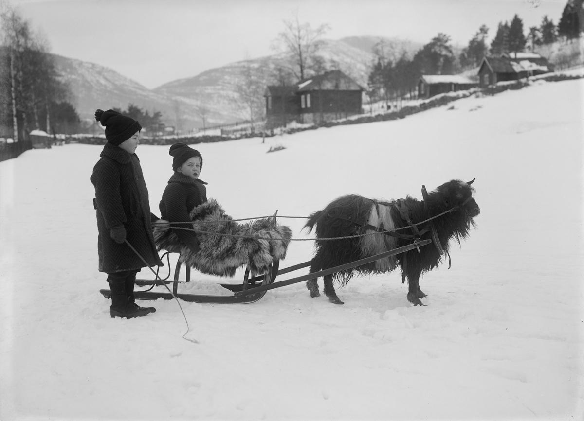 Brødrene Jens og Paul Kolseth med slede og geit på jordet til Byrhagen, Nord-Fron, Vinstra.