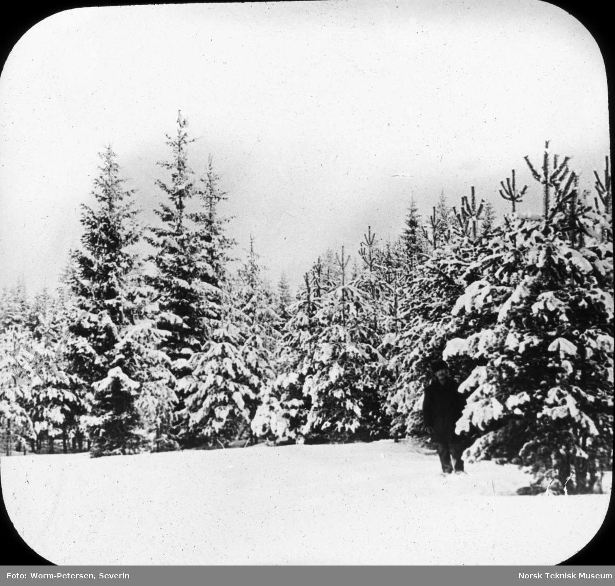 Ullensaker Statsskog 1873, fotografert i 1898