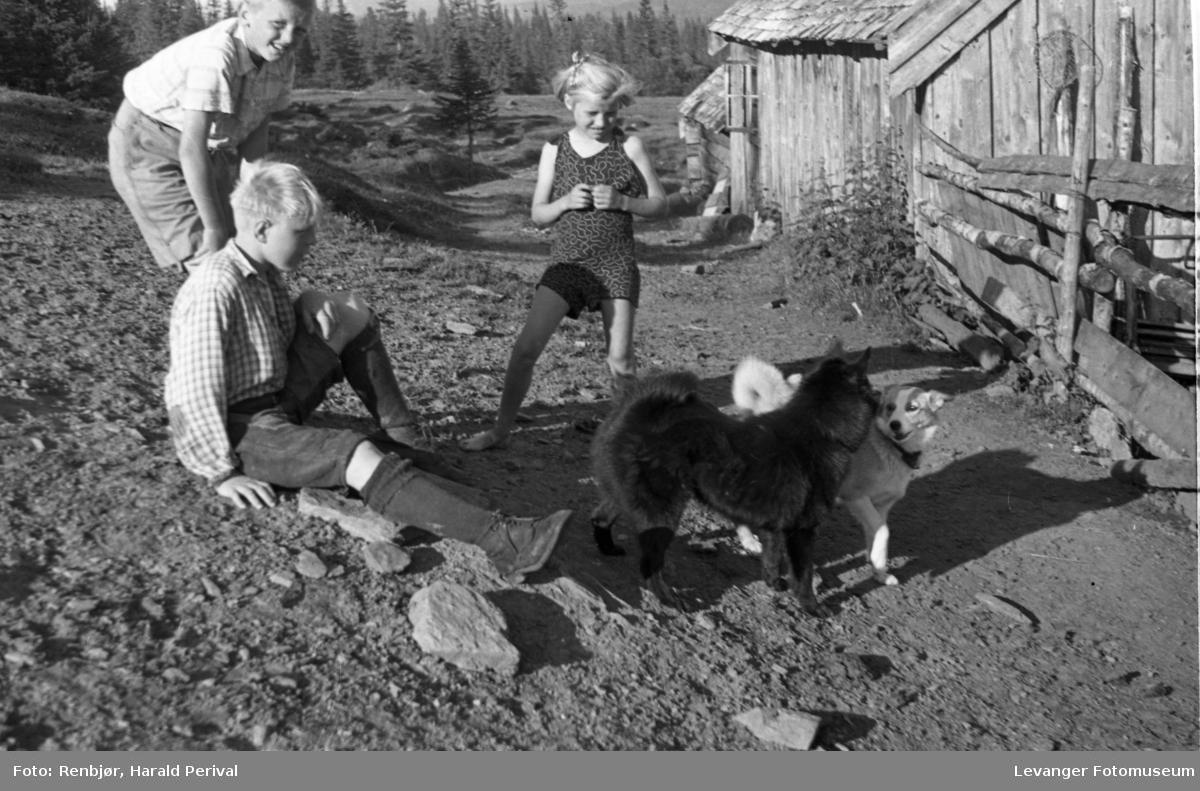 Barn leker med hunden Bamse på setra.