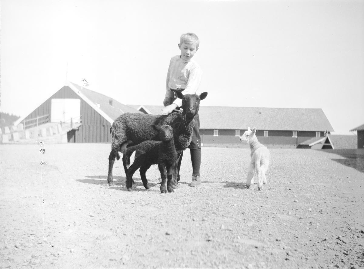 Iacob og tre sauer, en sort søye og to lam (et lyst og et sort), står på gårdsplassen til Linderud Gård.  I bakgrunnen sees driftsbygninger med låvebru. Gutten er sannsynligvis Iacob Ihlen Mathiesen og klapper søyen.