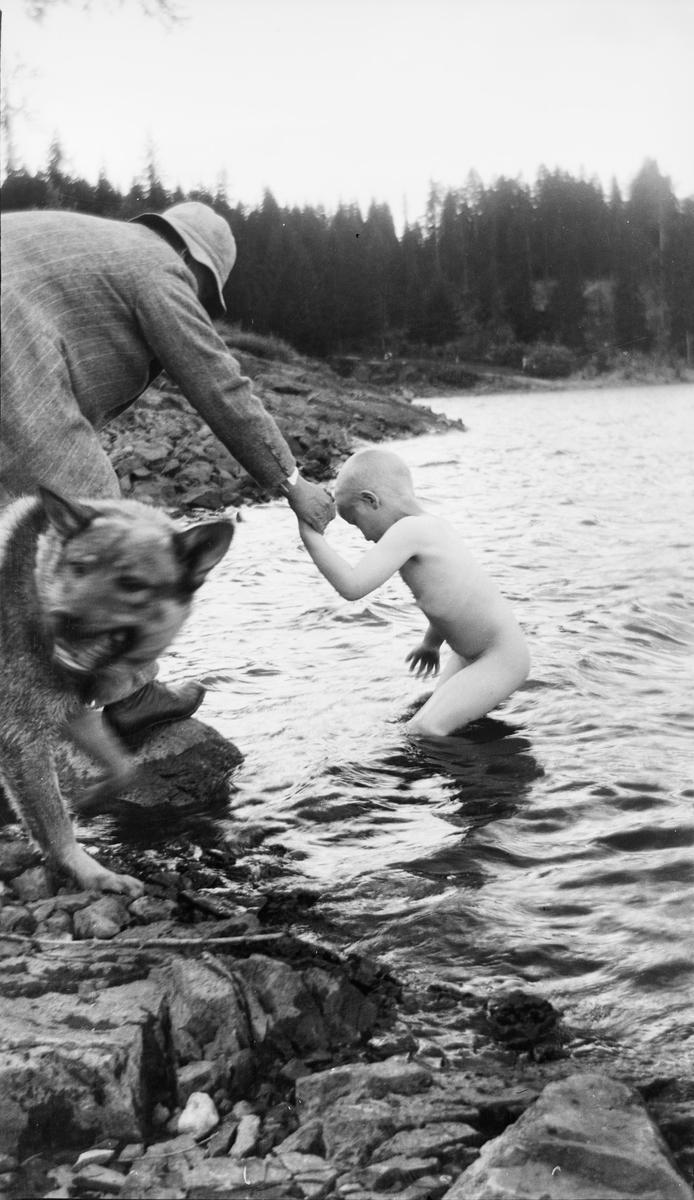 En mann hjelper et barn opp på land etter et bad i innsjøen. En elghund står ved siden av dem i strandkanten. Bildet er kanskje tatt ved en innsjø i Jeppedalen.