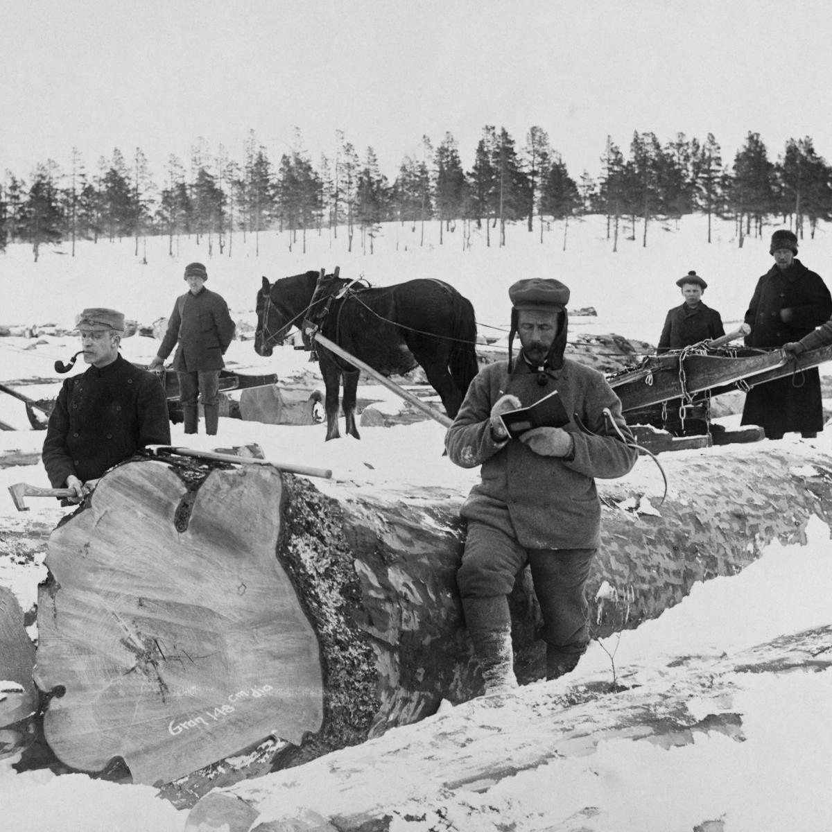 Tømmermåling på Femunden, Engerdal, Hedmark. (1905).