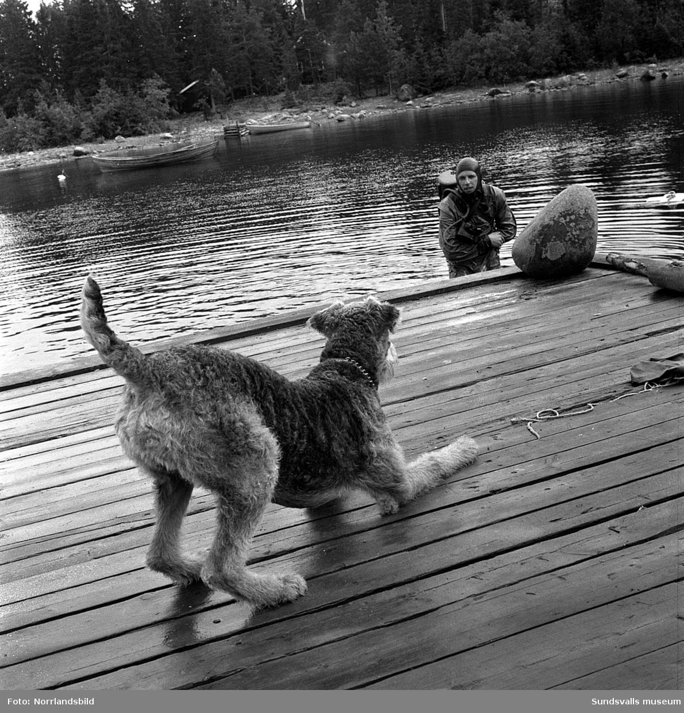 En grodman dyker i Spikarna, Alnö. En hund väntar på bryggan.