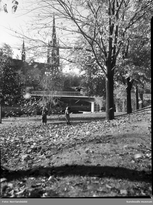Höstbild tagen från Skepparegatan på Norrmalm mot kyrkan. Två barn leker med de vissna löven invid Selångersån och på Storbron passerar en timmerbil.