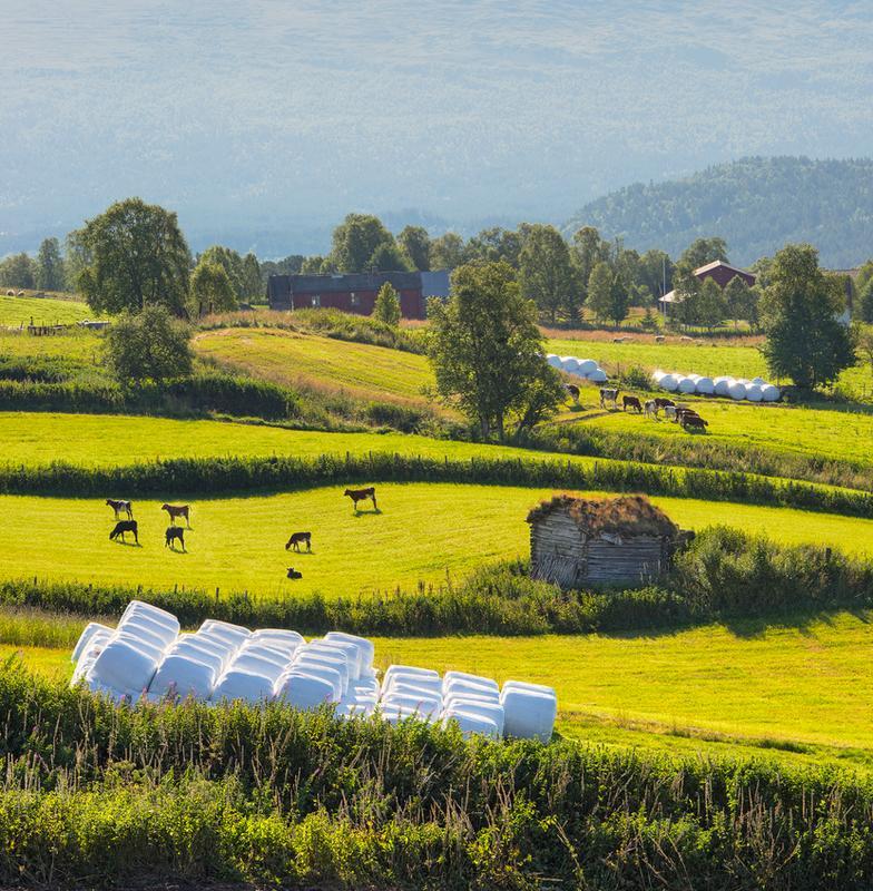 kutlur-crop.png