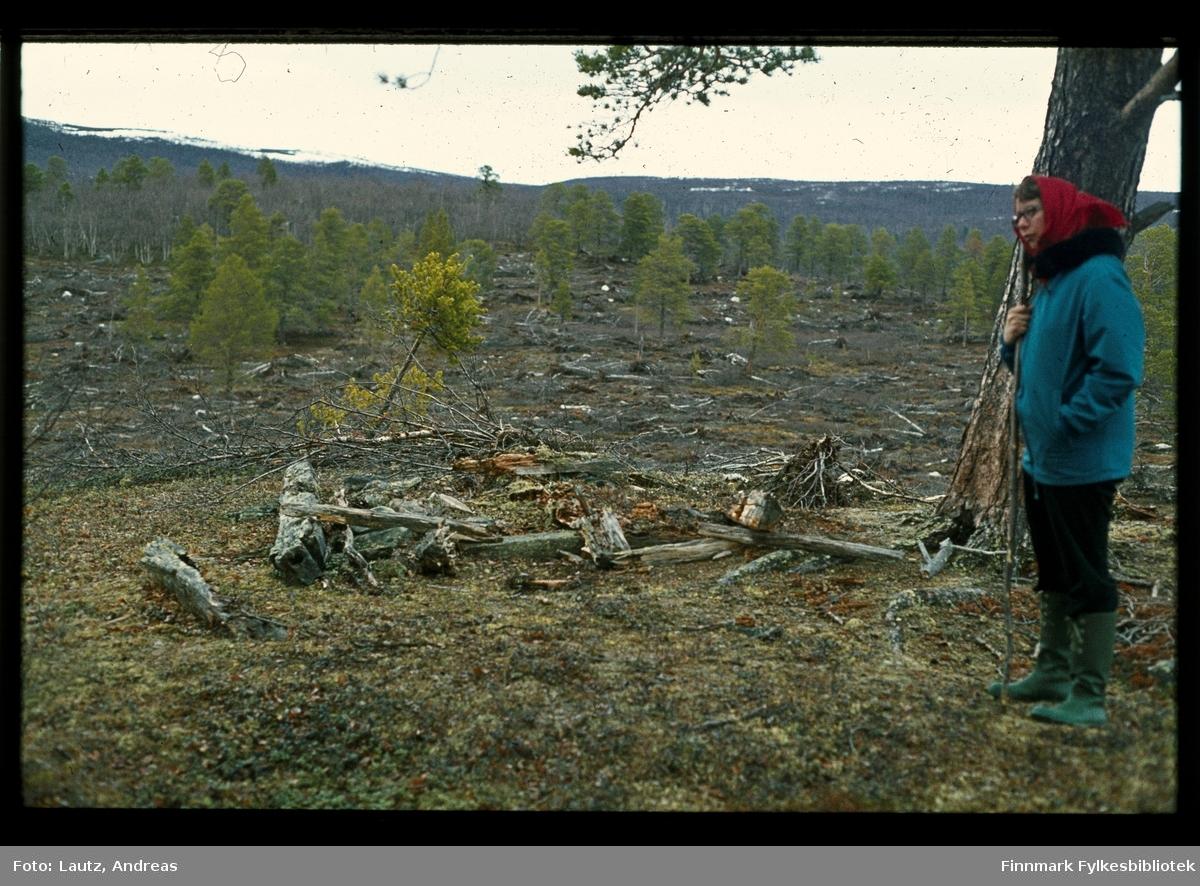 Karasjok. Rester av ulvefelle. Eli Rajala Lautz. 1972.