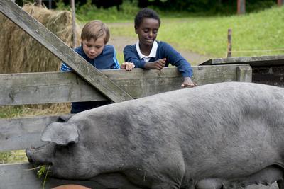 To gutter hilser på en stor gris i binge