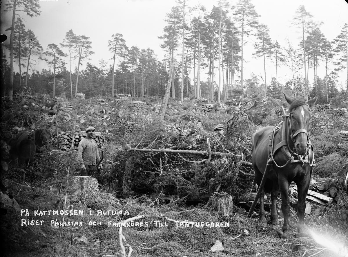 """""""På Kattmossen i Altuna, riset pålastas och framköres till trätuggaren"""", Uppland 1917"""