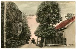 Postkort. Gatebilde med hestekjøretøy, hus og gjerder.