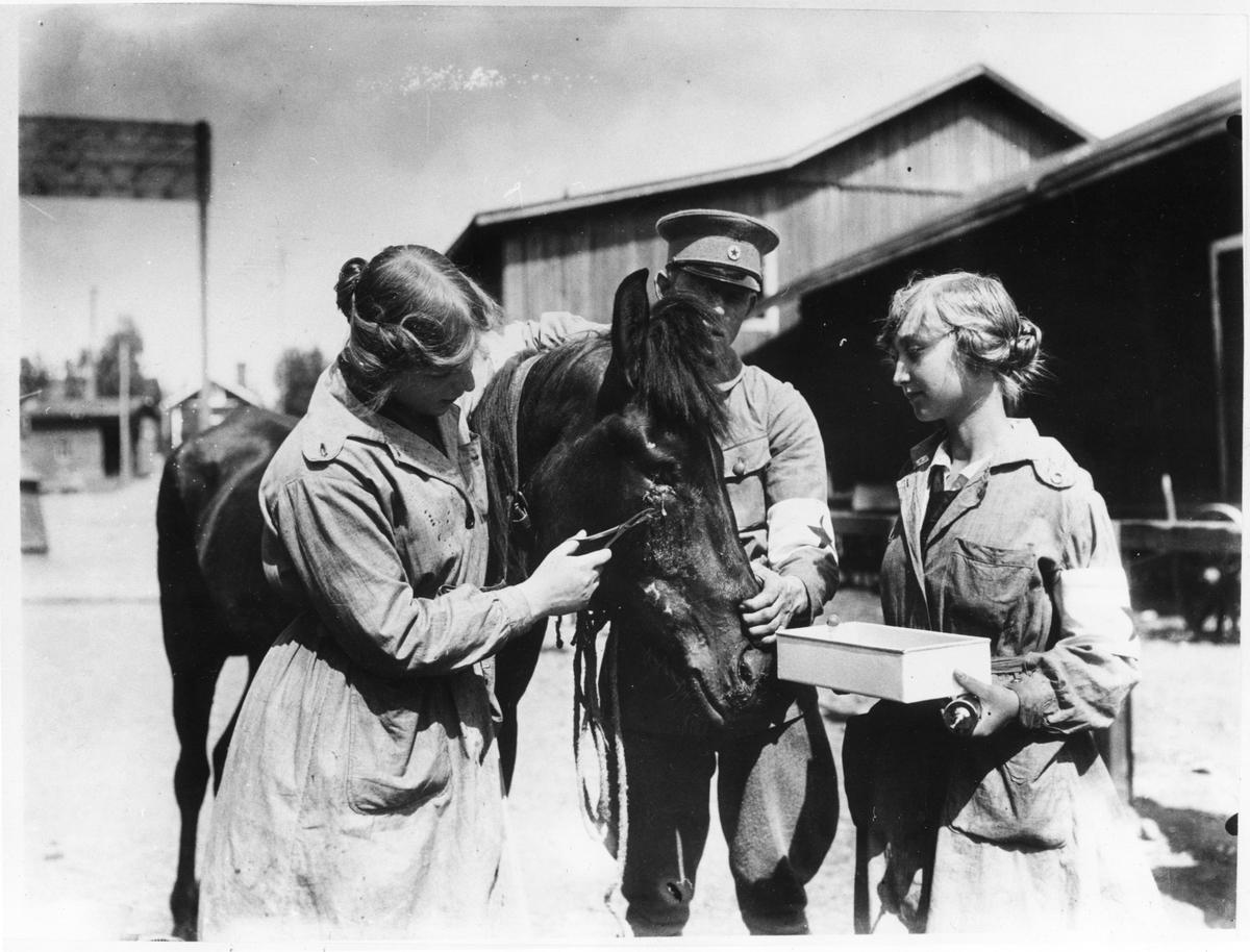 Kvinna undersöker häst med skadat öga, Finlandsambulansen, hästar i inhägnad utanför byggnad 1918