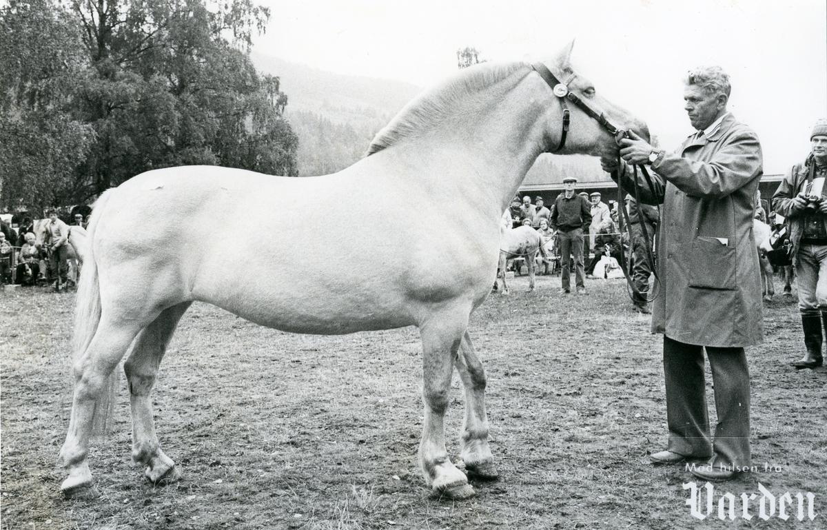 Olav Djuve mønstrar hest.