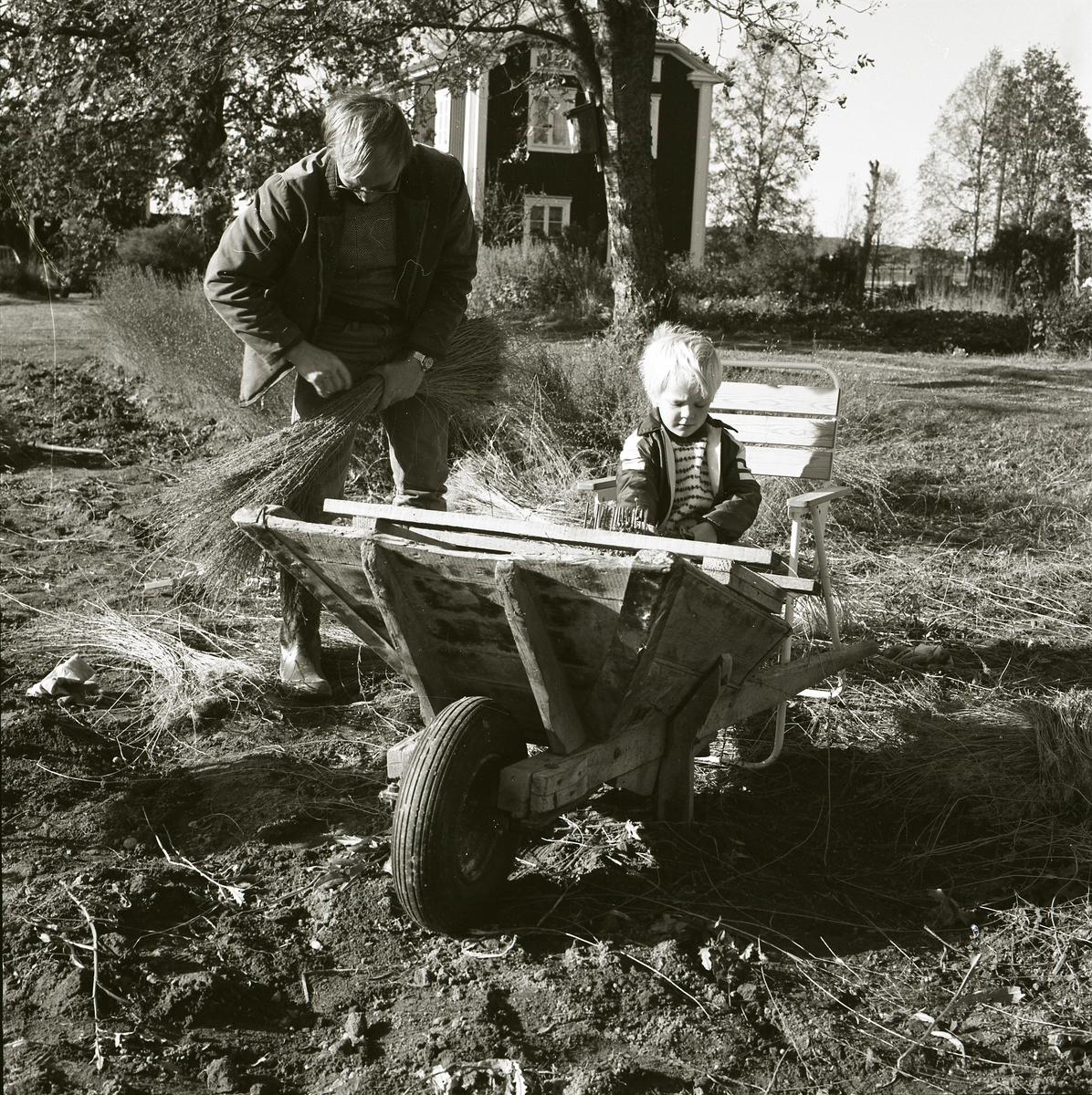 Ett barn sitter på en stol bakom en skottkärra och hjälper sin far med linrivning. Fadern står bredvid barnet och binder ihop en kärve av linstjälkar. Linet har odlats på gården Sunnanåker i Glössbo och skördas i oktober 1983.
