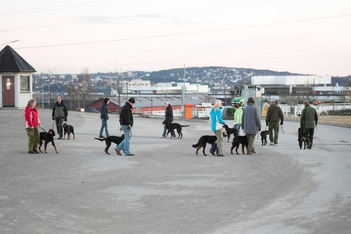 Dressurkurs for hund. Hundeeiere og hunder på kurs.