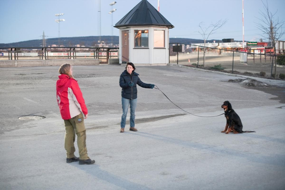 Dressurkurs for hund. Hund og eier instrueres på kurset.