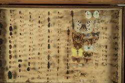 Insektsamling