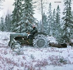Transport av utvommet elg under elgjakta i Slemdalen i Nordr
