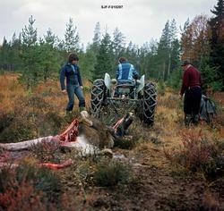 Bjørn Nomerstad rygger en traktor, en Ferguson «Gråtass», mo