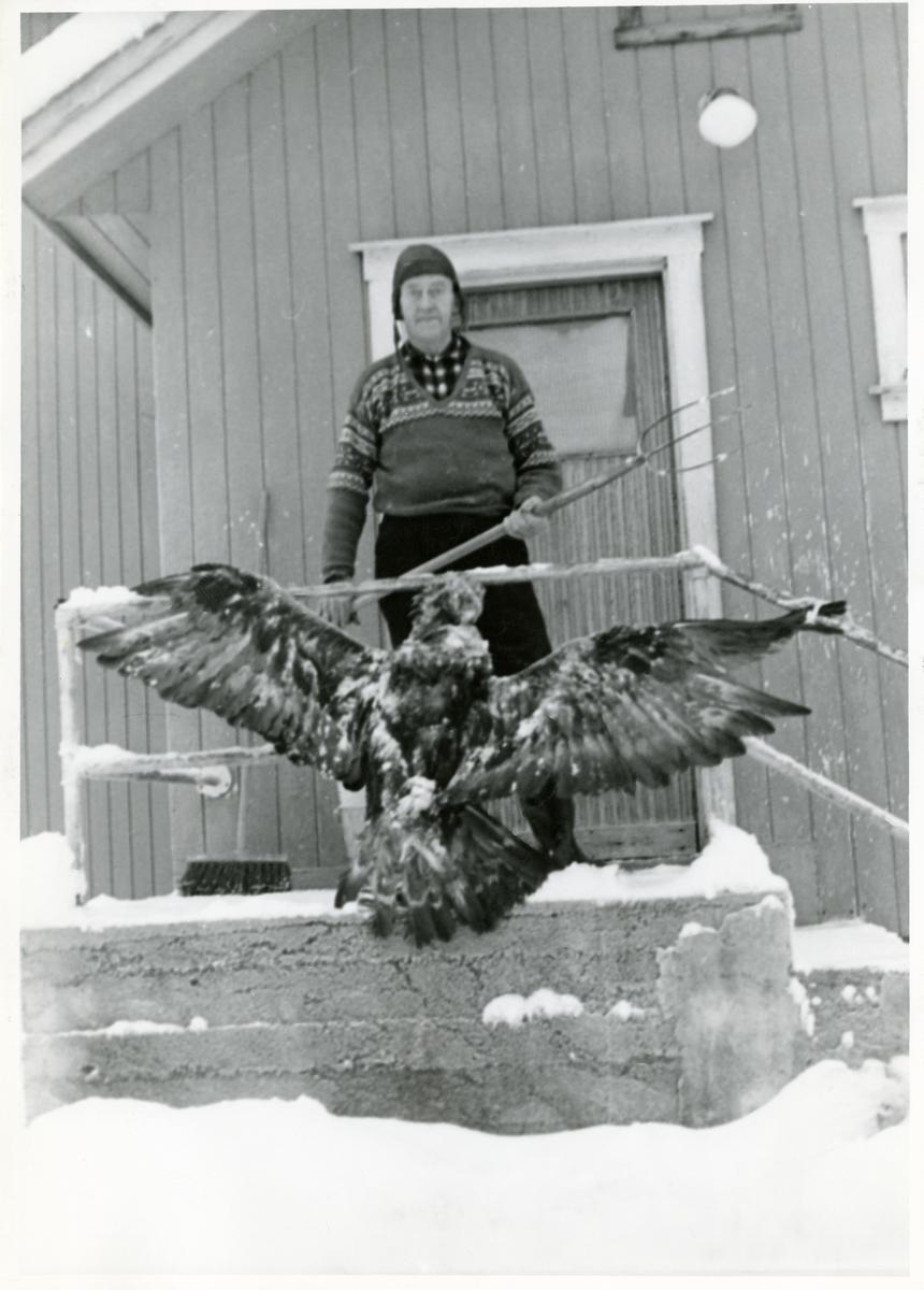 Erik Hardhaug Skogstad med ein ørn som han slo ihjel fordi den var skada.