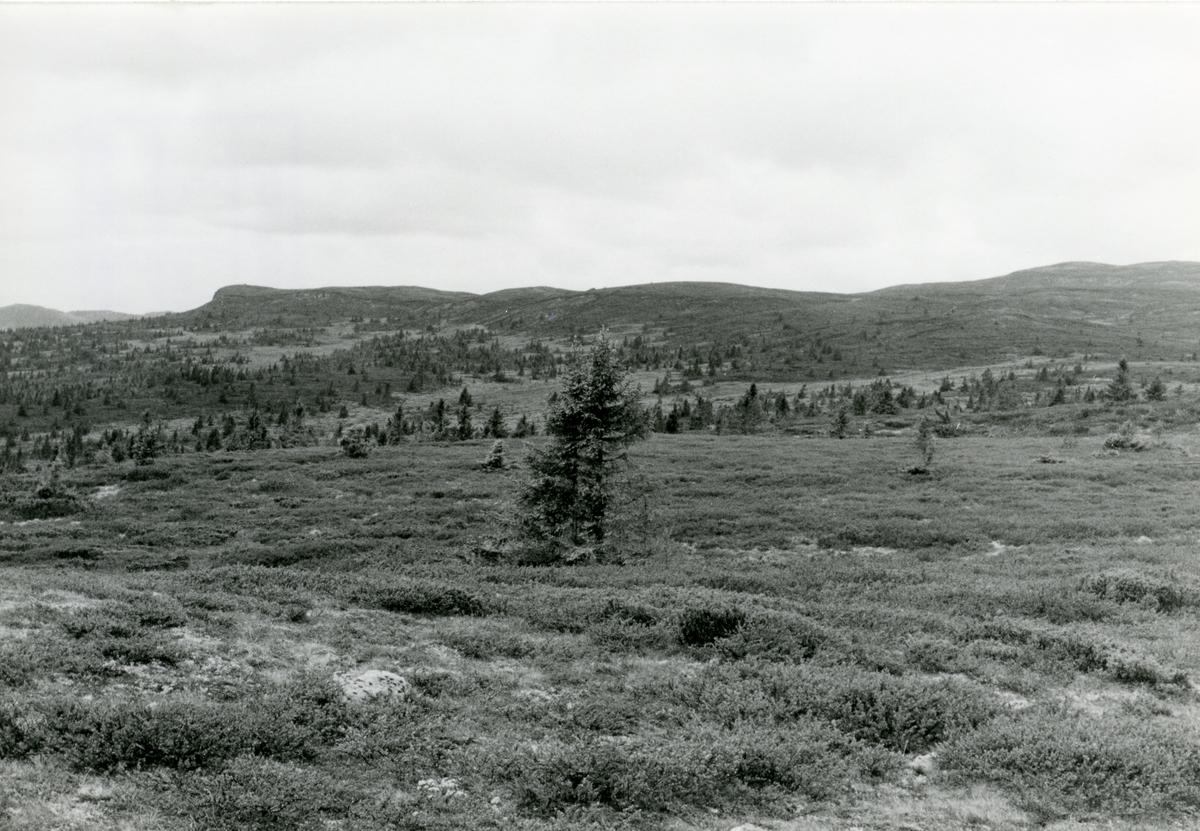 Motiv fra Høvreslia, Sør-Aurdal.