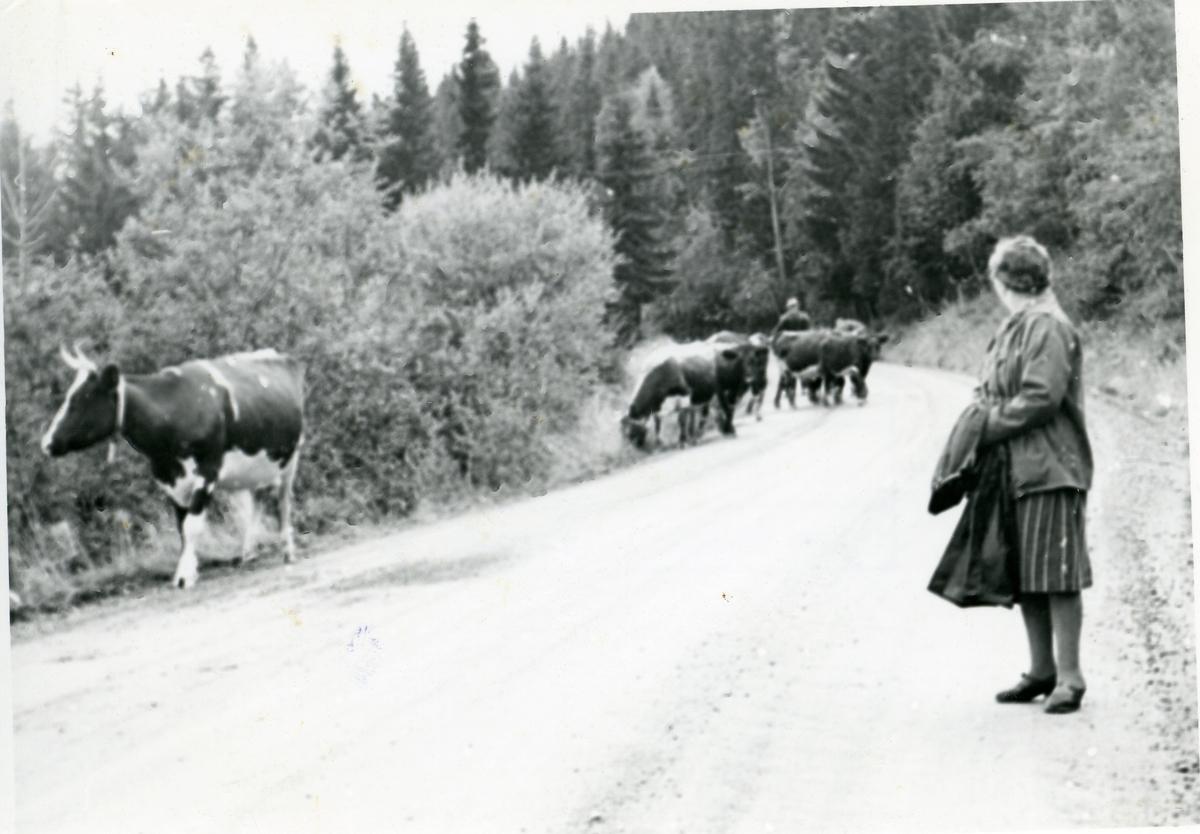 Tora og Knut Grøndalen. Seterflytting.
