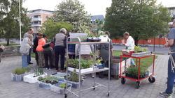 Plantekasser_med_urter_og_blomster_-_Museumsfabrikken_-_MiA_Museene_i_Akershus.jpg