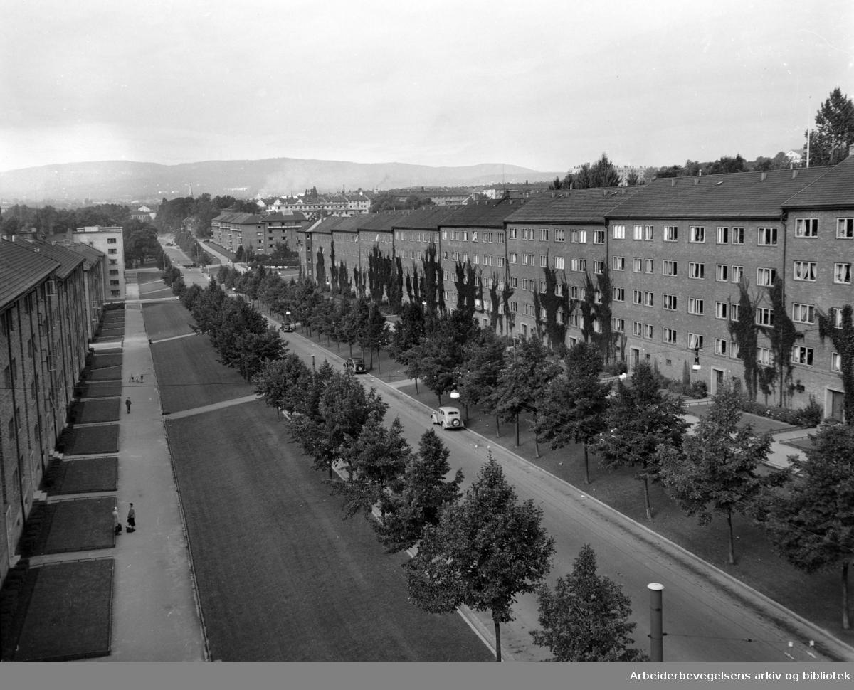 Chr. Michelsensgate 51 - 57. September 1951