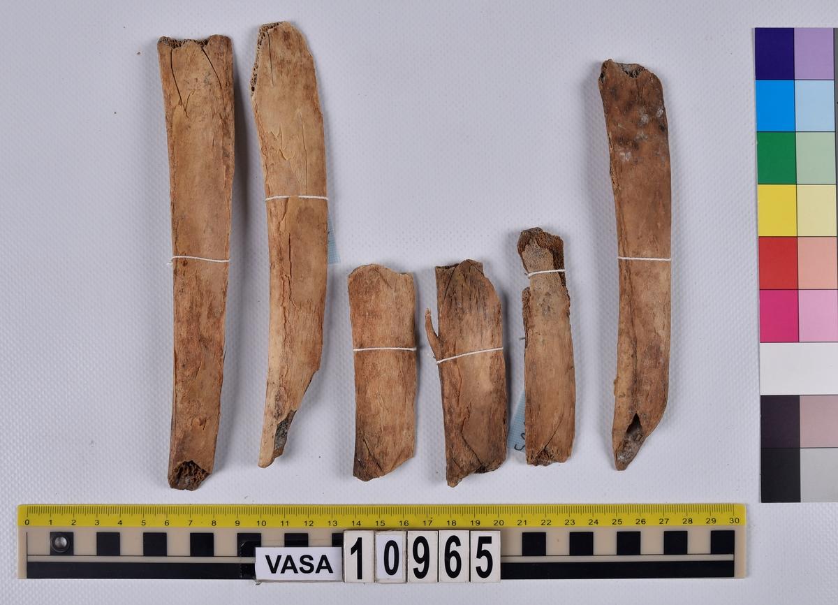 Ben från nötkreatur (Bos taurus). 6 st. revbensfragment (costae).