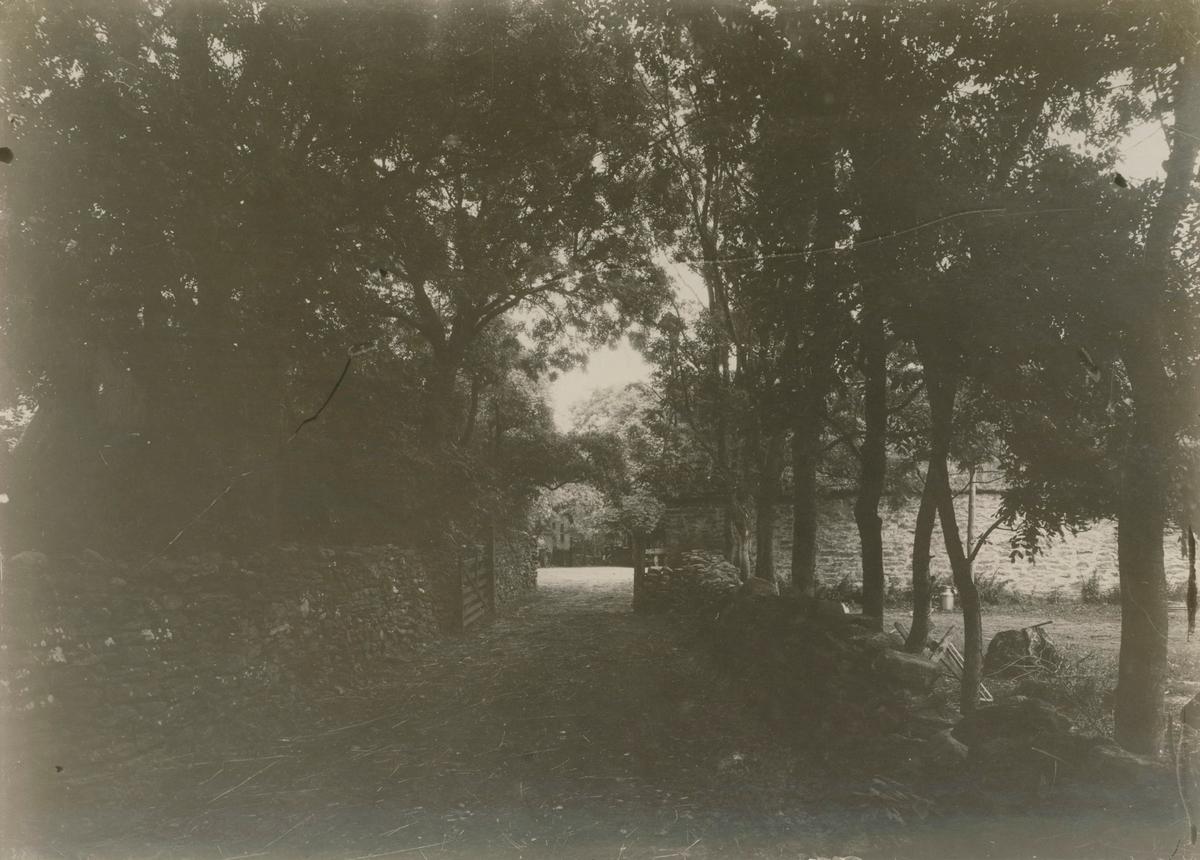 Den allékantade vägen upp till Galltorps säteri.