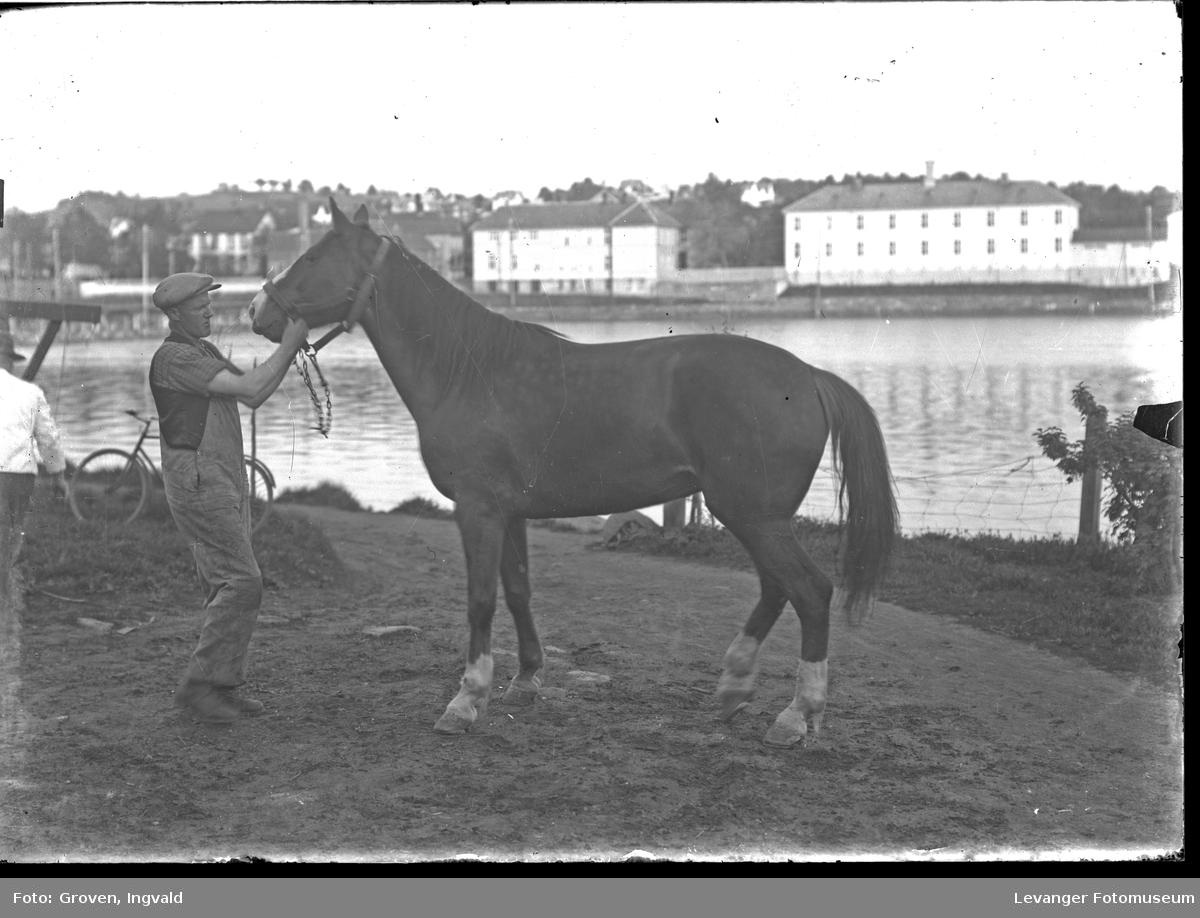 Hest, sportshest portrettert på Nessetsida,  den gamle Byskolen i bakgrunnen.