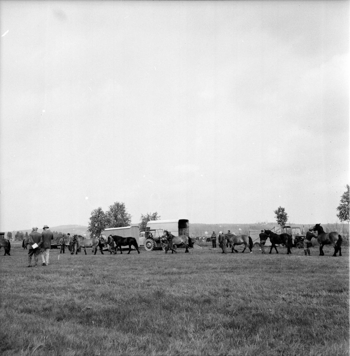 Ovanåker, Hästpremiering, 16 Juni 1965