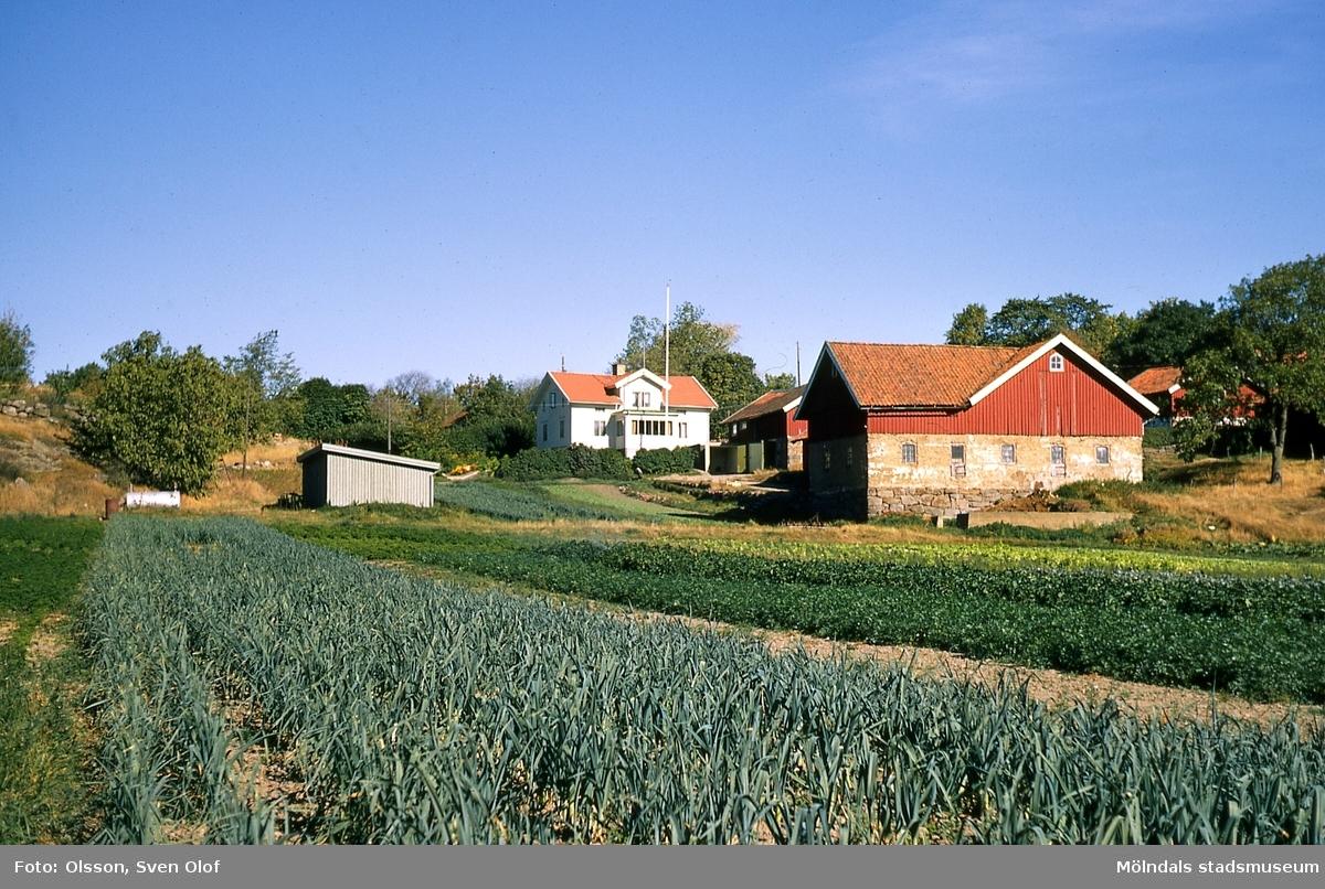 Bebyggelse och grönsaksodlingar på Gökegården 2 i Eklanda, Mölndal, år 1964.