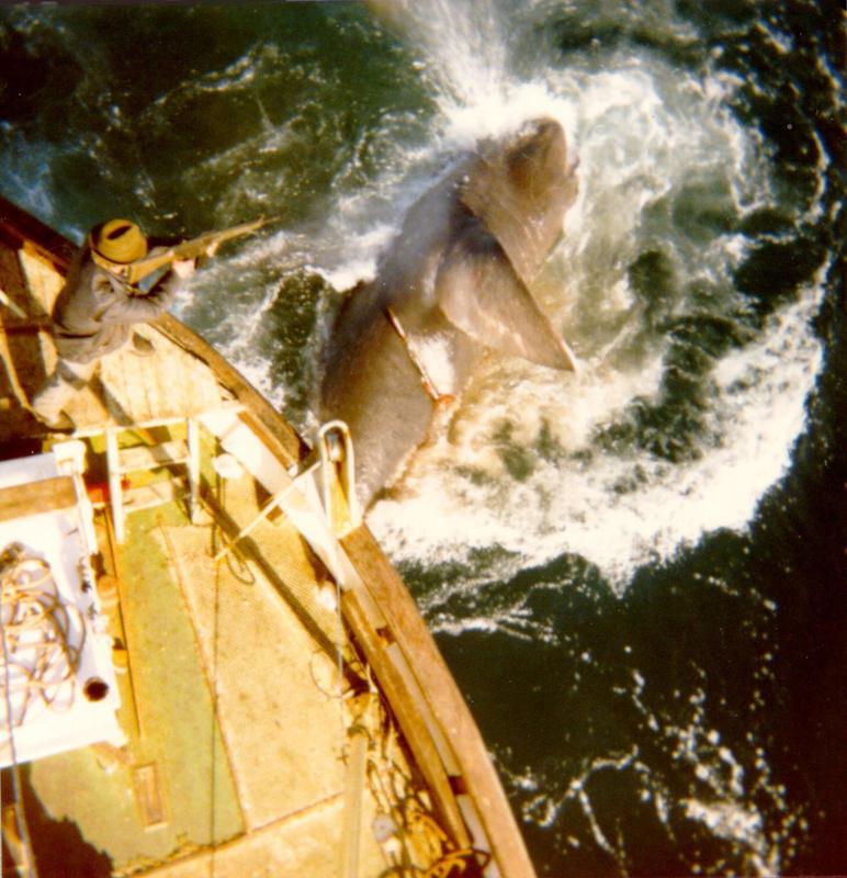 Brugdefiske på Vita. Foto Paul Torkelsen