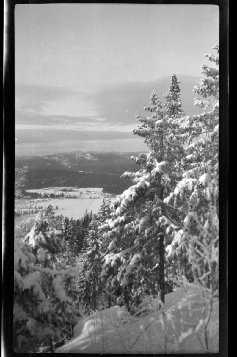 Vinterutsikt fra Villa Knyggen i Voksenlia, Oslo. Fotografert 1921.